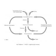 CPD 3-1 Model of immunity in a population (Artist: Chatterton, Ken)