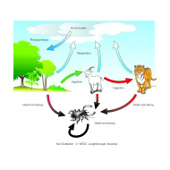 008 Simplified carbon cycle (Artist: Chatterton, Ken)