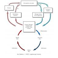 009 The nitrogen cycle (Artist: Chatterton, Ken)