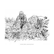 Harvesting (Artist: Shaw, Rod)
