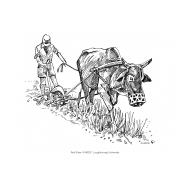Ploughing (Artist: Shaw, Rod)