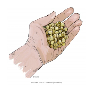 Hand with aggregate - colour (Artist: Shaw, Rod)