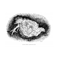 Chicken with avian flu (Artist: Shaw, Rod)