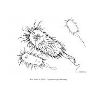 Ecoli germ (Artist: Shaw, Rod)