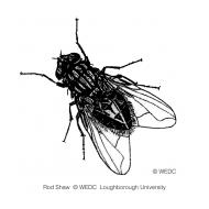 Fly (Artist: Shaw, Rod)