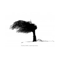 Tree in a storm (Artist: Shaw, Rod)
