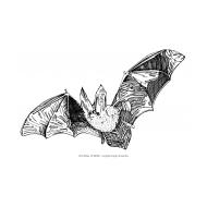 Bat (Artist: Shaw, Rod)