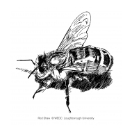 Bee (Artist: Shaw, Rod)