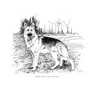 Dog (Artist: Shaw, Rod)