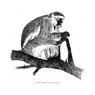 Monkey (Artist: Shaw, Rod)