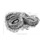Snake (Artist: Shaw, Rod)